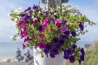 Blumendekoration mit Petunien