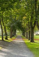 Allee, Rosskastanie, Schloss Berleburg,
