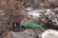 This green plant stands out among the burnt vegetation