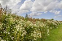 flourish vegetation in Eastern Frisia