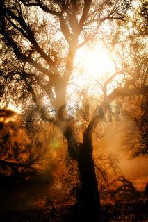 Sonnenaufgang, Kgalagadi-Transfrontier-Nationalpark, Südafrika   sunrise, Kgalagadi Transfrontier National Park, South Africa