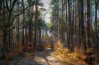 Sonniger Pfad durch einen leuchtenden Herbstwald