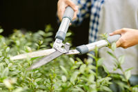 woman with pruner cutting branches at garden