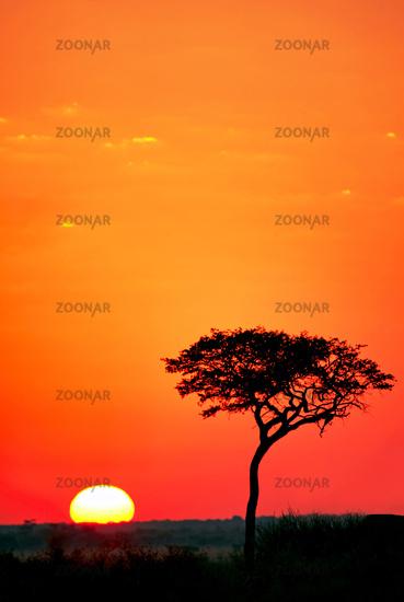 Sonnenaufgang in der Zentralkalahari, Sunday Pan, Botswana; sunrise at central kalahari game reserve, Botsuana