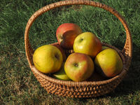 Rustic organic apples in a wicker basket on a meadow orchard,