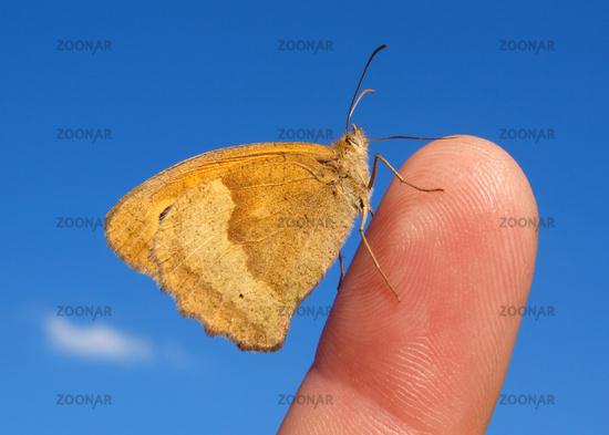 Ein Schmetterling sitzt auf einem Finger
