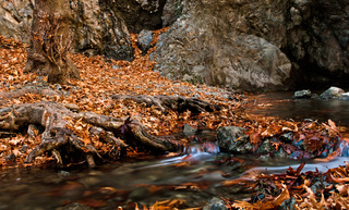 Autumn landscape with water stream flowing in the forest