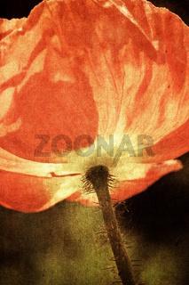 poppy falls in love