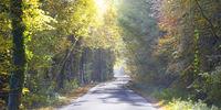 Landstraße im Sonnenlicht durch eine Natur im Herbst