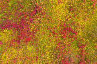 top view on red and yellow grass background