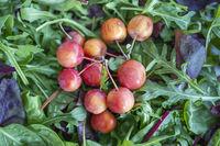 Wildkräutersalat mit rötlichen Zieräpfeln