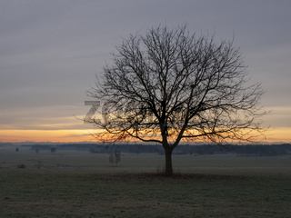 Winterliche Morgenröte mit Baum