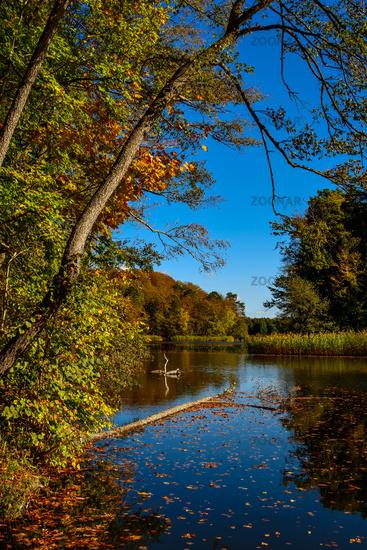 Herbststimmung am Hellsee bei Lanke im Brandenburgischen Naturschutzgebiet Biesenthaler Becken