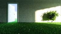 concrete wall with grass and flower floor in empty room and sunlight shadow effect on wall 3D rendering