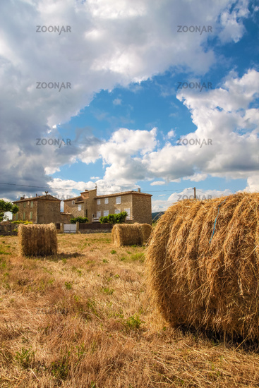 Harvested cornfield in the Provence