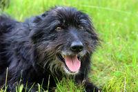 schwarzer Hund liegt im Gras