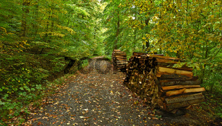 Herbstwaldweg mit Brennholzstapel