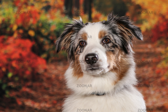 Dogs shot in Studio on black and natural backgrounds. Posing and
