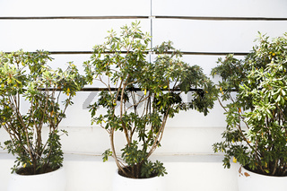 Decorative green plants in pots