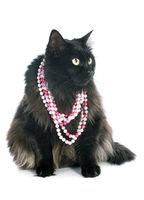 black cat and collar