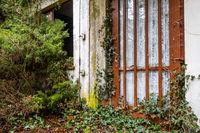 alte zugewachsene Tür