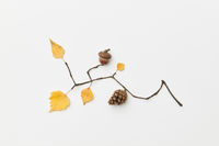 Autumnal leaves and twigs