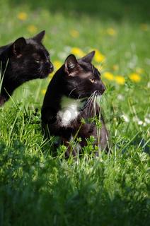 Katzen im Gras