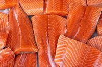 Fresh Salmon Fish Fillets on Ice