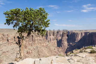 Lonely tree along canyon in Arizona, USA