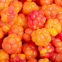 Bright yellow and red ripe cloudberry as a background