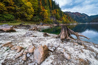 Tree stumps after deforestation near Gosauseen or Vorderer Gosausee lake, Upper Austria. Autumn Alps mountain lake with clear transparent water and reflections.