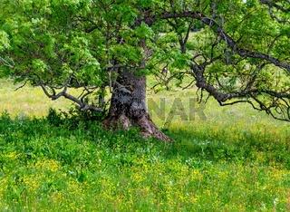 Baum auf blühender Wiese