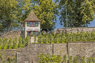 Weinberg Rapperswil-Jona, Kanton St. Gallen