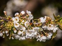 Tür auf Biene rein
