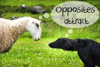 Dog Meets Sheep, Text Opposites Attract