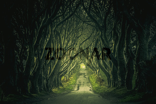 ANTRIM, NORTHER IRELAND, DECEMBER 20, 2018: The Dark Hedges in Northern Ireland. Majestic, spooky and mysterious road across very old trees. Featured in the Game of Thrones as the Kings Road.