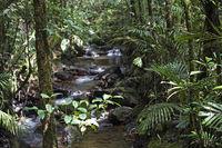 Ein Bach im Bergregenwald  im Kinabalu Nationalpark, Borneo, Malaysia