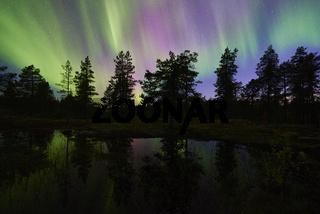 Nordlicht (Aurora borealis) spiegelt sich in einem See, Lappland