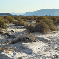 Loneliness and emptiness of the desert
