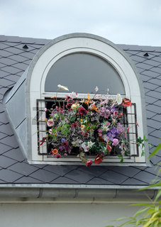 Blumenfenster in Hoorn, Holland