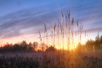 grass during the dawn of the sun