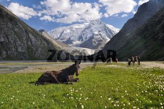 Tian-Shan in Kyrgyzstan
