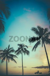 Hawaii Retro Sunset Palm Trees