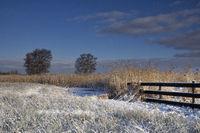 Landscape near Wijckel