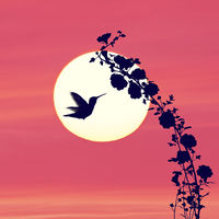 Flowers silhouette and a hummingbird against  sunset