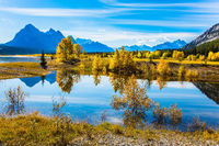 The artificial Abraham lake reflects trees