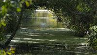 Bewässerungsgraben, Kanal - idyllischer Fluss bei Dierhagen, Ostsee