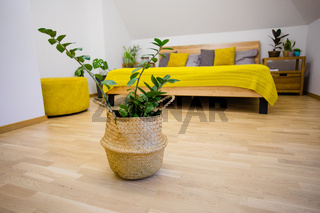 Green plants as a part of bedroom design