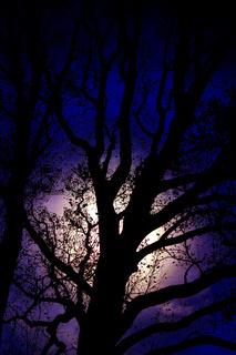 Jet-black tree