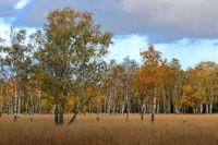 Herbst im Duvenstedter Brook